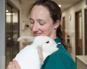 Veterinary nurse with rabbit