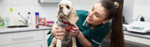 Veterinary nurse with dog